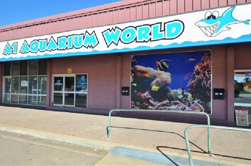Freehold and/or Business Opportunity – A1 Aquarium World