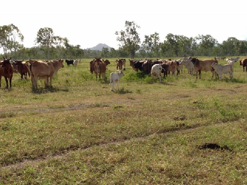 Brookhill – Cattle Farm – 626 Acres close to the City